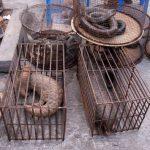 关于禁止野生动物交易的公告